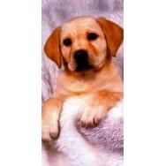 Drap de bain, serviette de plage Labrador