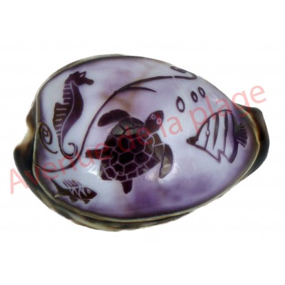 Coquillage Tigrine gravée animaux marins
