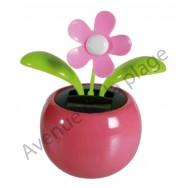 Fleur rose solaire qui se balance, pot rose.