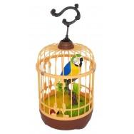 Perroquet en cage sonore