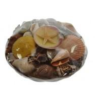 Panier de coquillages 20 cm
