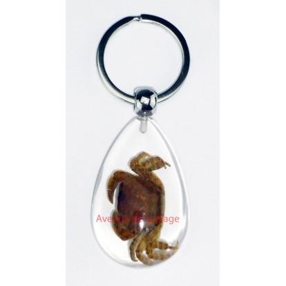 Porte clefs transparent avec véritable crabe - inclusion.