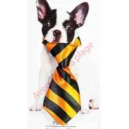 Cravate pour chien rayée orange et noire.