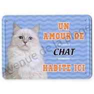 Pancarte métal : Un amour de chat blanc habite ici