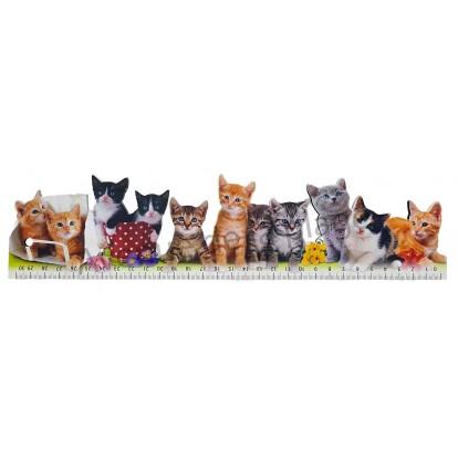 Règle d'école chats modèle A