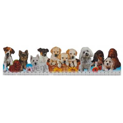 Règle d'école chiens