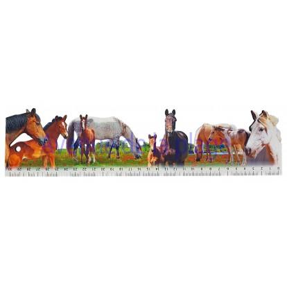 Règle d'école chevaux modèle A.