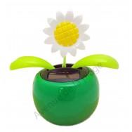 Fleur marguerite solaire qui se balance
