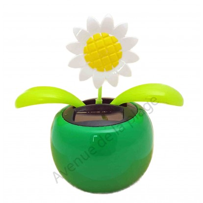 Fleur marguerite solaire qui se balance A