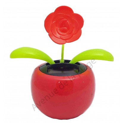 Fleur rose rouge solaire qui se balance B