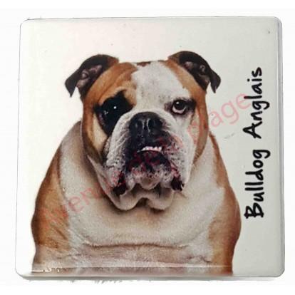 Magnet Berger Bulldog anglais