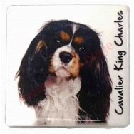 Magnet Cavalier King Charles tricolore