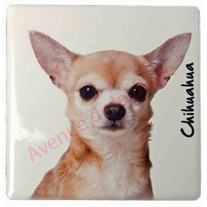 Magnet Chihuahua poils courts