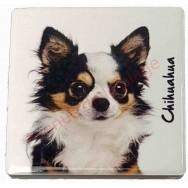 Magnet Chihuahua poils longs