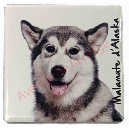 Magnet Malamute d'Alaska